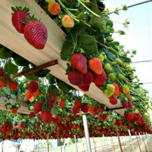 How to grow a garden when you're short on space? Answer: Vertical Gardening