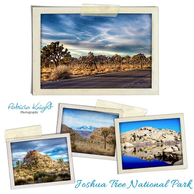 Hometown Adventure Series- JoshuaTree National Park
