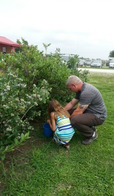father and daughter Blueberry picking