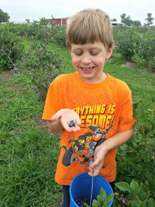 blueberry picking - Little orbs of blue yumminess- Summer fun for kids and food lovers