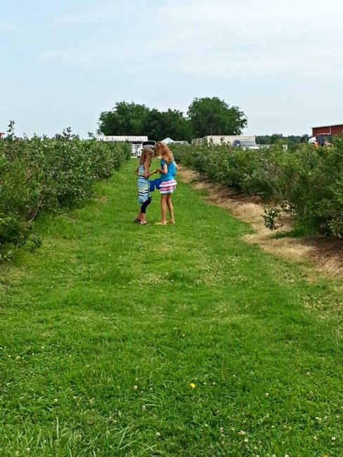 girls standing in a blueberry farm row