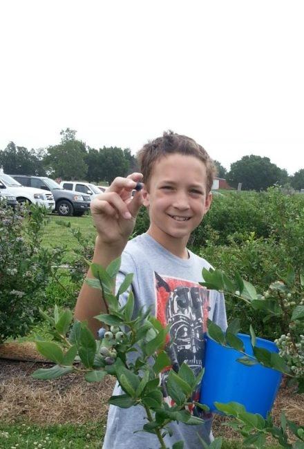 boy Blueberry picking