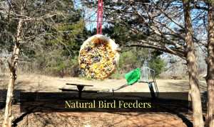 DIY Natural Bird Feeder