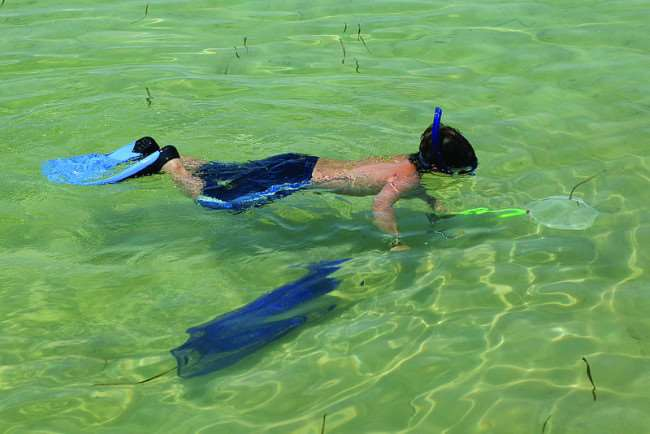 Snorkeling in Gulf County, Florida