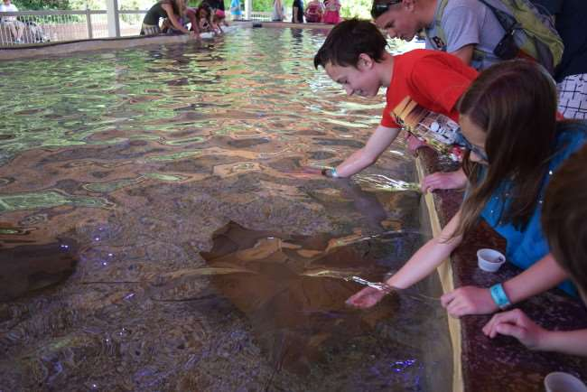 Kids feeding stingrays at Stingray Bay in OKC Zoo