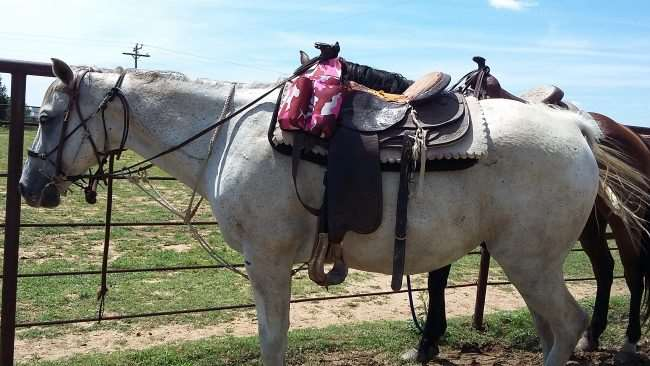 Horses for our trail ride at Arbuckle Trail Rides