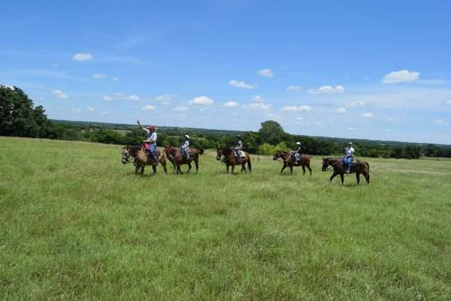 horses and riders on a grassy plain
