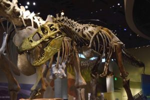 5 Family-Friendly Places in Dallas to enjoy and get out of the summer heat - Perot Museum of Nature and Science - T. Rex and Alamosaurus in the T. Boone Pickens Life Then and Now Hall