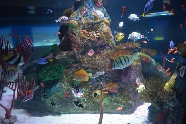 SEA LIFE Aquarium - Family-Friendly Place in Dallas to enjoy and get out of the summer heat - This is the place to explore an amazing underwater adventure