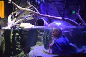5 Family-Friendly Places in Dallas to enjoy and get out of the summer heat - SEA LIFE Aquarium is the place to explore an amazing underwater adventure