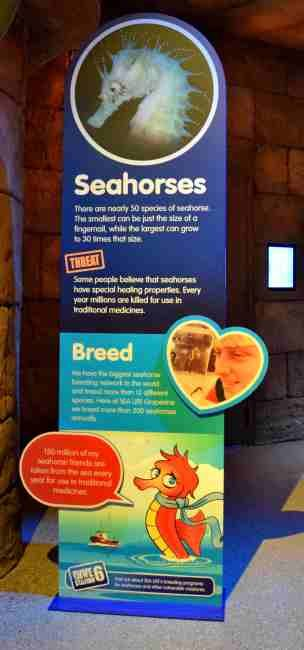 Family Fun SEALIFE Aquarium Grapevine - Seahorses