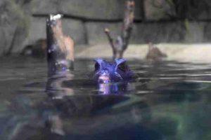 Family Fun SEALIFE Aquarium Grapevine - Rainforest Adventure