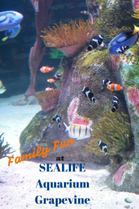 SEALIFE Aquarium Grapevine- A great place to spend the day in Dallas for a little family fun