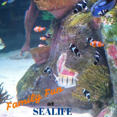 Family Fun SEALIFE Aquarium Grapevine