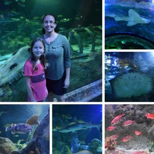 SEALIFE Aquarium Grapevine - Ocean Tunnel