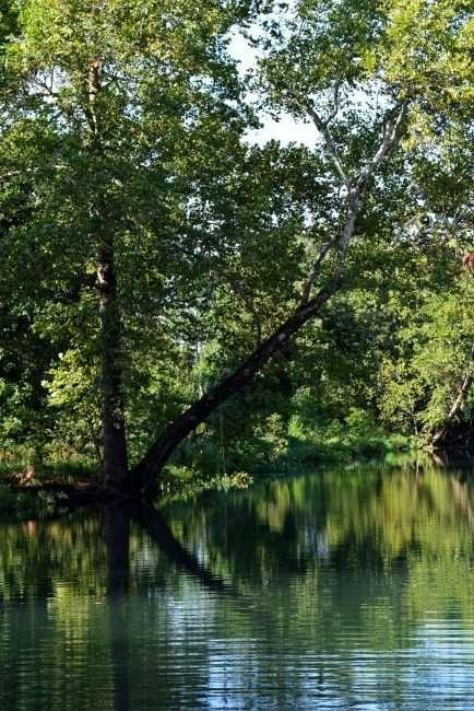 creek under trees
