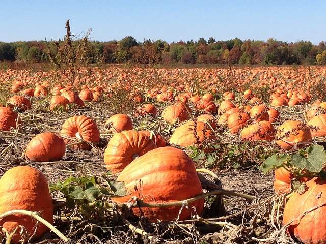 10 Amazing Fall Activities to Get You & the Kids Outdoors