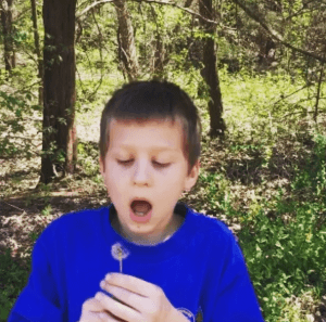 In a field full of dandelions, grab a seed head and make a wish. #lilfamadventure #pictureoftheday #dandelion #makeawish #spring #justforfun #familyfun #outfam #outdoorfun #outdoorplay #outdoor #greenspace A video posted by Nicky (@lilfamadventure)