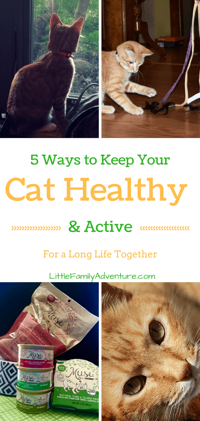 5 Ways to Keep Your Cat Healthy and Active - It starts with food that provide everything your cat needs to be healthy. #mycatmymuse #ad