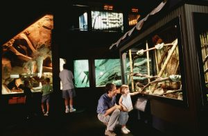 Top 10 Things to Do with Kids in Wilmington, NC - Cape Fear Serpentarium
