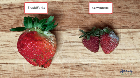 Strawberries from both containers - The Secret to Keeping Summer Produce Fresher Longer - Learn how you can keep fruits and vegetables longer without going bad and save too. Get our produce shelf life and storage infographic as well as take the #LongLiveProduce Challenge #ad