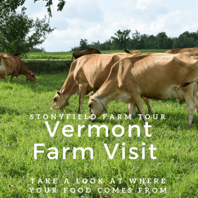 Stonyfield Farm Tour – Organic Dairy Farms in Vermont