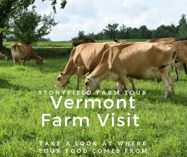 Stonyfield Farm Tour - Vermont Dairy Farm Visit to See Where Our Food Comes From