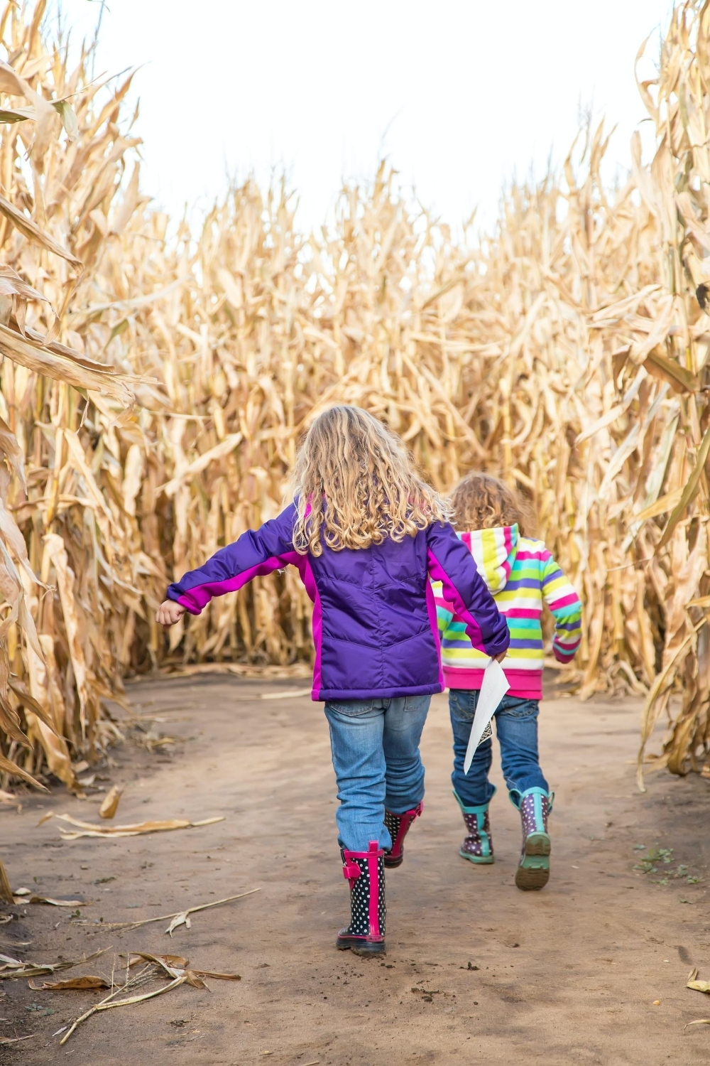 children in corn maze
