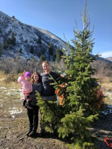 The Best Tips on How to Cut Down Your Own Christmas Tree