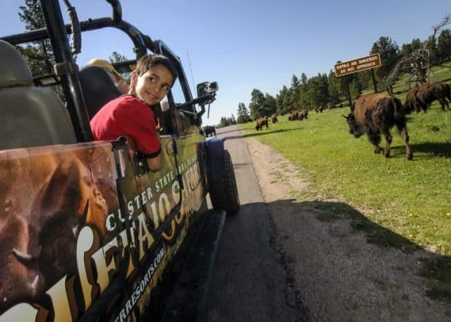 Buffalo Jeep Safari, Family Adventure, South Dakota State Park, Custer State Park