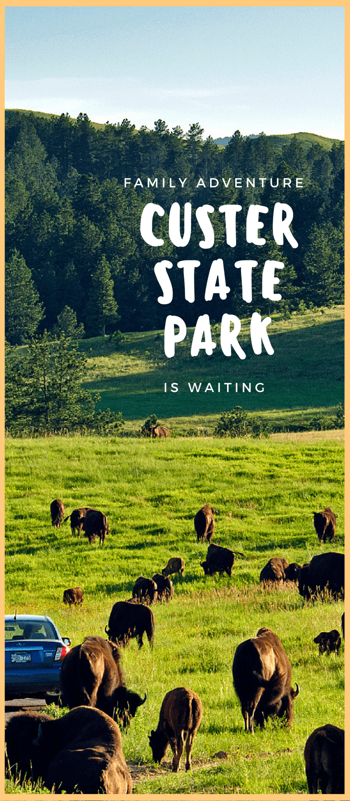 Custer State Park, South Dakota, Top Wildlife Viewing Destination,