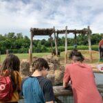 teens looking at elephants