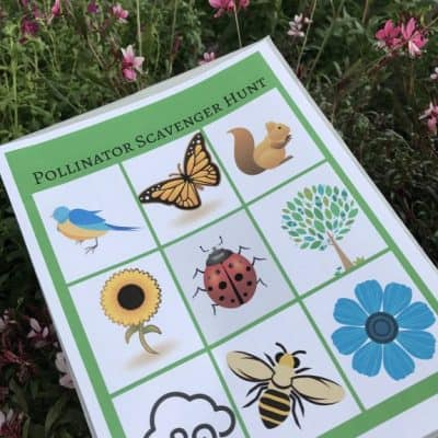 I Spy Pollinator Scavenger Hunt & Tips to Protect Honey Bees