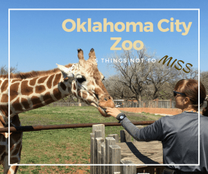 5 Things Not to Miss at the Oklahoma City Zoo - Here are few fun kid-friendly activities the family will love