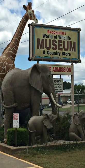 Tyler Texas Free Wildlife museum awesome play ground good for young kids