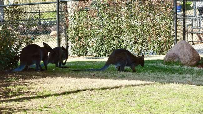 Wallaby Walkabout - 5 Things Not to Miss at the Oklahoma City Zoo - Here are few fun kid-friendly activities the family will love