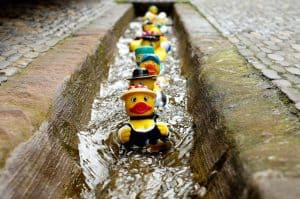 Get Your Ducks in a Row for Financial Confidence - Tips to helping you become financially secure and live the life you want