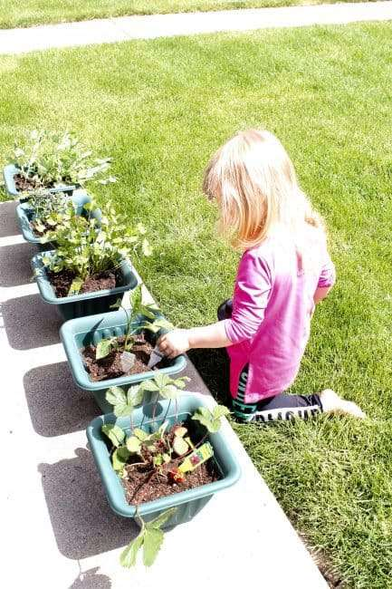 Get in the garden with your kids. They learn about where food comes from and so much more. Here are 5 Lessons learned when gardening with a toddler