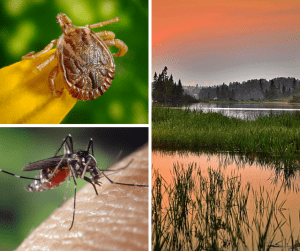 A day at the lake IS summer fun. Don't let insects like mosquitos put a damper on that fun. There are a few things you can do, including using a natural mosquito repellent, to keep bugs away all summer long.
