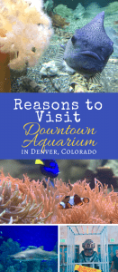 Discover the Underwater World at Denver's Downtown Aquarium - Here are 4 reasons to visit this family fun attraction today. Hint: One includes mermaids