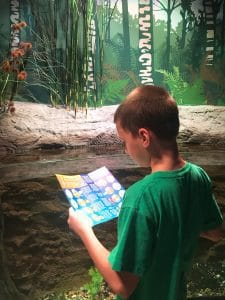 SEA LIFE Kansas City - Hallmark Visitor Center - - Things to Do in Kansas City with Kids - Family Friendly Museums and KC BBQ