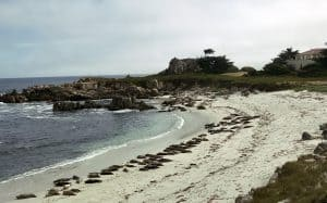 Harbor Seals can be see all along the Pacific Coast. If you are in Cannery Row and Monterey, CA, here are a few places to find them. Plus find other fun Things To Do in the area