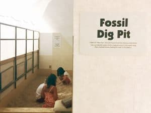 I70 Road Trip - 5 Things to Do in Hays, Kansas with Kids - There are plenty of hands on fun at the Sternburg Museum of Natural History