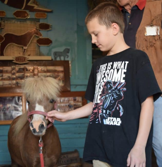 I70 Road Trip - 5 Things to Do in Hays, Kansas with Kids - Schedule a tour of Blue Sky Miniature Horse Farm
