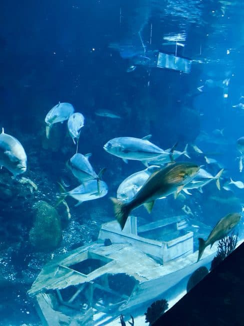 Dine With Mermaids at the Downtown Aquarium Restaurant - Enjoy lunch or dinner in front of a 50,000 gallon aquarium filled with fish, eels, and stingrays