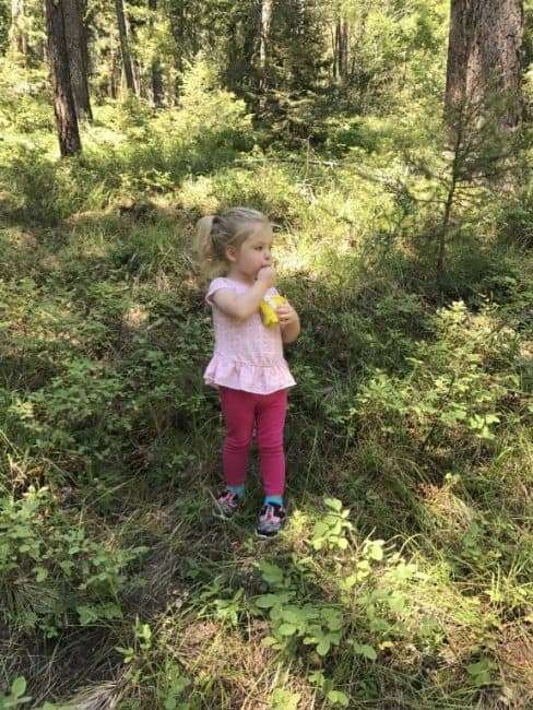 Little Girl eating Huckleberries