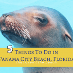 5 things to do in Panama City Beach that are not the beach
