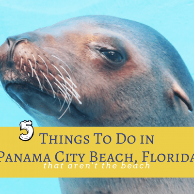 5 Family-Friendly Panama City Beach Attractions that are NOT the Beach