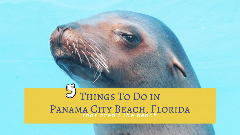 5 Things To Do In Panama City Beach That Are Not The Beach Little Family Adventure