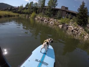 Stand up paddleboarding with a pug